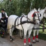 So fährt man in der Vojvodina stilecht zum Weinfest.