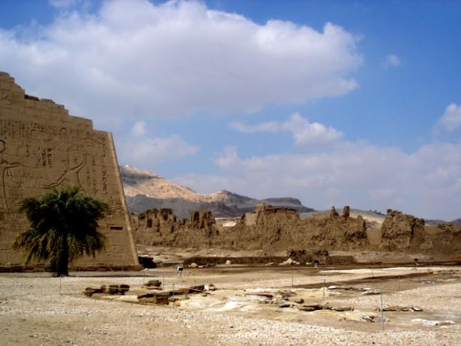 Der Beweis: Auch in Ägypten gibt es Bäume.