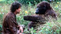 Peter (Dylan Walsh) hat dem Gorilla Amy die Gebärdensprache beigebracht.