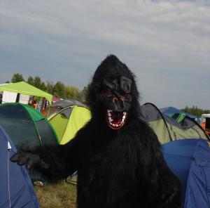 Highfield 2015 Gorilla