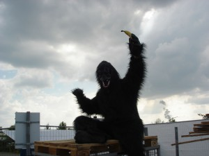 Gorilla Highfield Festival 2015 Banane