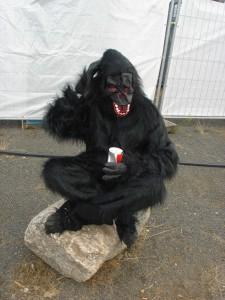 Highfield 2015 Gorilla Fels