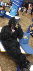 Gorilla Siesta Highfield 2015
