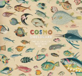 Cosmo Sheldrake The Much Much How How And I Albumkritik Rezension